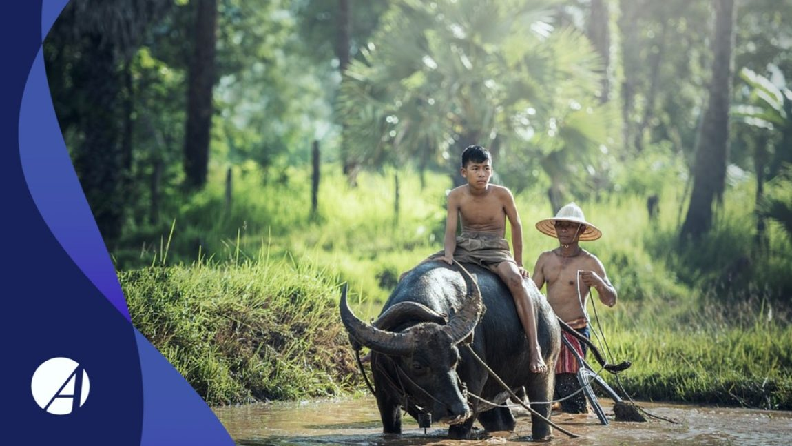 Trabalho Rural Infantil pode ser considerado como tempo para Aposentadoria