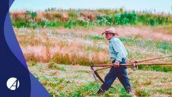 Como comprovar a Atividade Rural no INSS